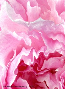 Abstract Peony by Kim Robbins