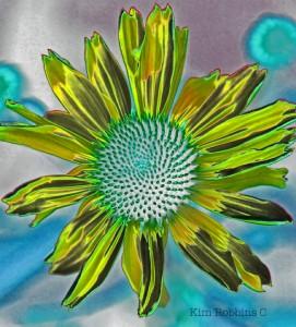 Lime Green Daisy