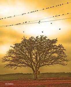 Migration by Kim Robbins