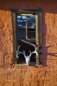 Deer Mule Skull in the Window
