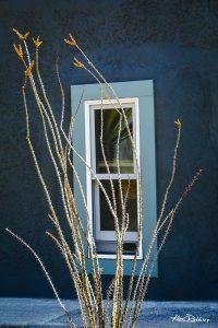Ocotillo & Window