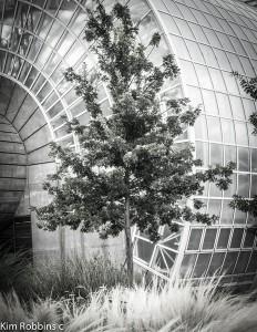 Myriad Gardens