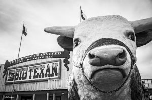 Big Texan Cow