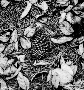 Pine Cones and Leaves