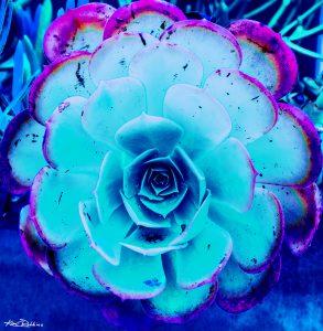 Indigo Flower Commissioned Work