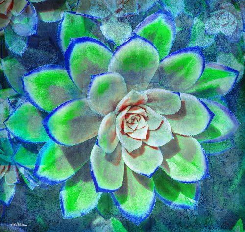 Blue & Green Succulent