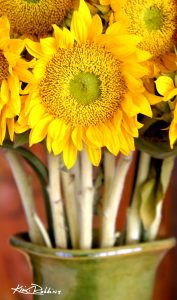 Sunflower in Green Vase