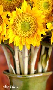 Sunflower in Green Vase