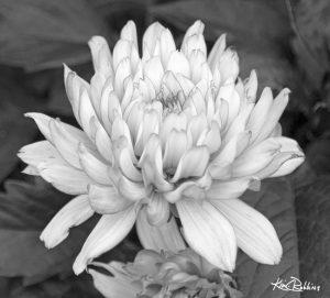 Kanpeki in Black & White