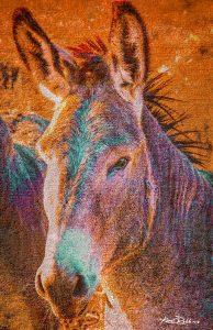 Colorful Donkey