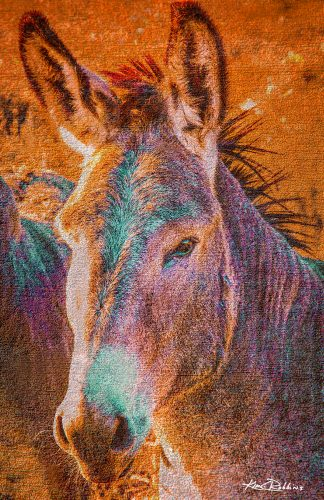 Colorful Donkey