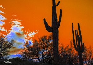 Saguaro on Orange Sky