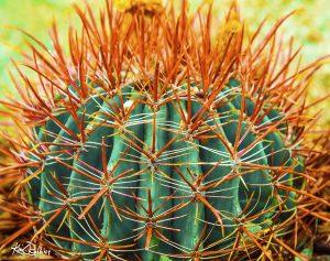 Pumpkin Cactus