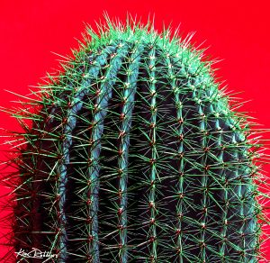 Sonoran Cactus on Red