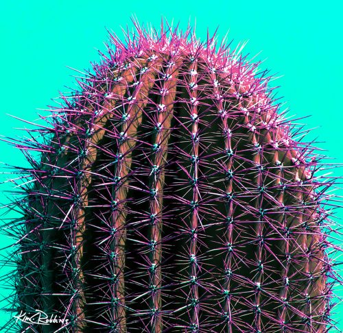 Sonoran Cactus on Turquoise