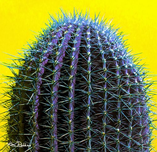 Sonoran Cactus on Yellow