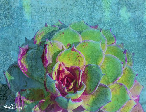 Turquoise & Pink Succulent