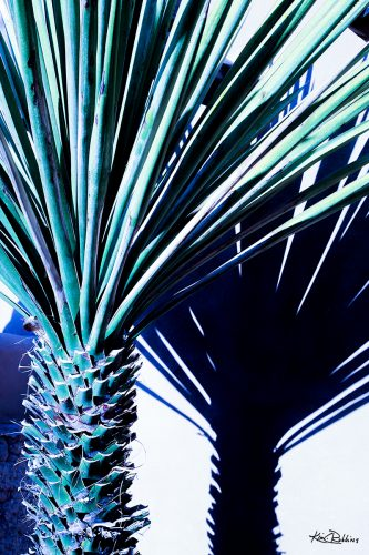 Turquoise & Navy Palm