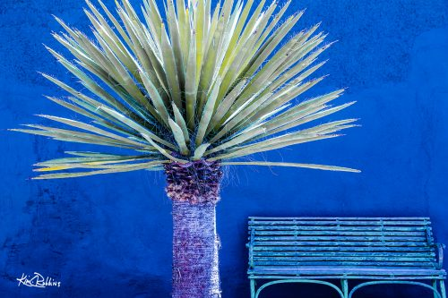 Palm On Blue