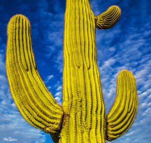 Wasabi Cactus