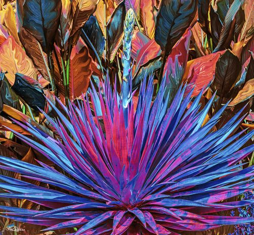 Jungle Yucca #2