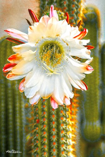 White Cactus Blossom on Green