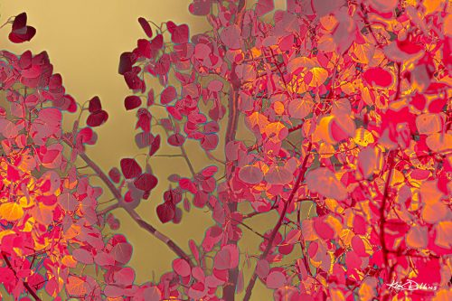 Aspens in Gold & Fuschia